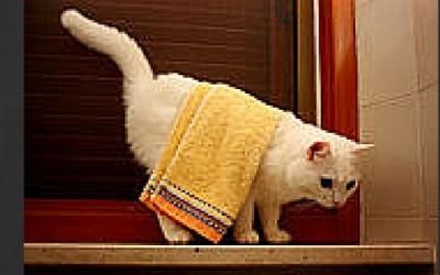 Happy Towel Day!